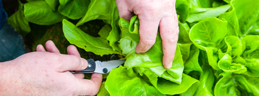 slider_image_local_grower-2
