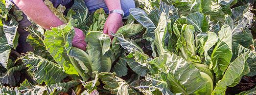 slider_images_local_grower_2 - Dennis