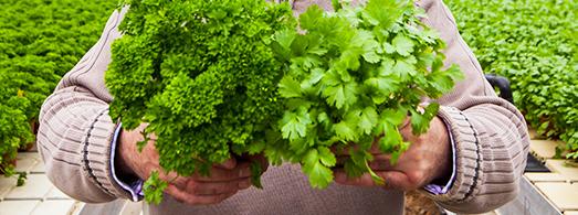 slider_images_local_grower_2 - Tom