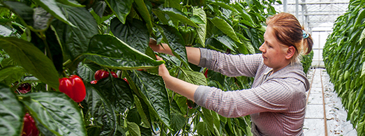 slider_images_local_grower_3