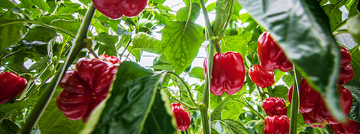 slider_images_local_grower_4
