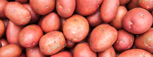 slider_images_local_grower_3_POTATO